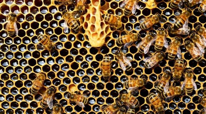 Dalle api arriva la nuova pellicola per alimenti 100% biodegradabile ed eticamente responsabile