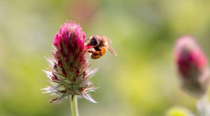 Nelle città zone fiorite per le api