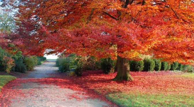 Veder cader le foglie