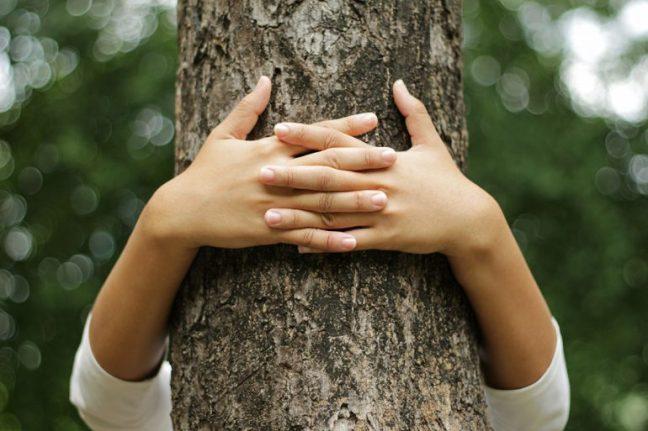 abbraciare-gli-alberi-770x513