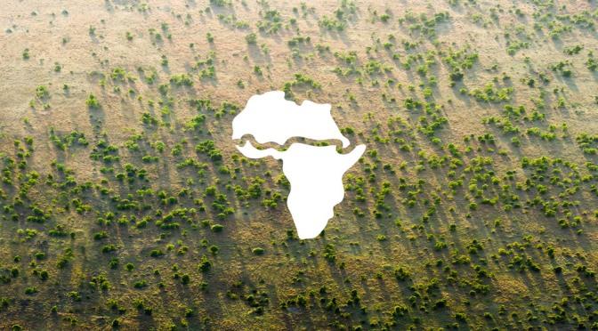 The Great Green Wall: un muro di piante e alberi per combattere la desertificazione in Africa