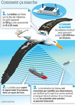 albatrosentinel2
