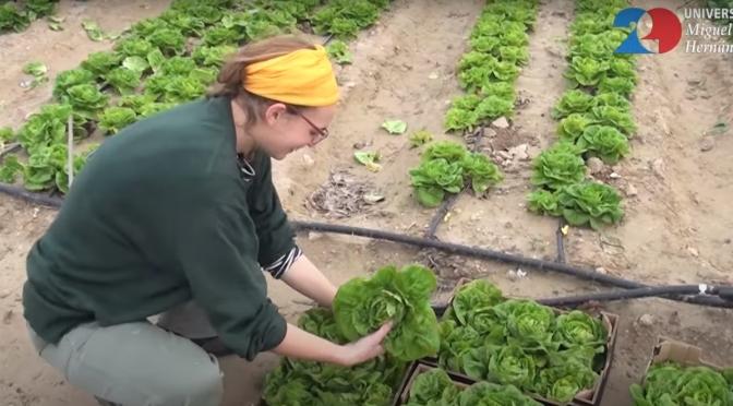 3 rubriche per consumatori informati e aspiranti contadini